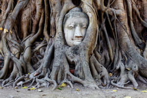 Buddha head tree roots ayutthaya thailand