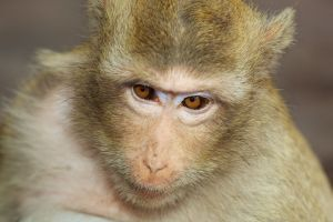 front_monkey.jpg